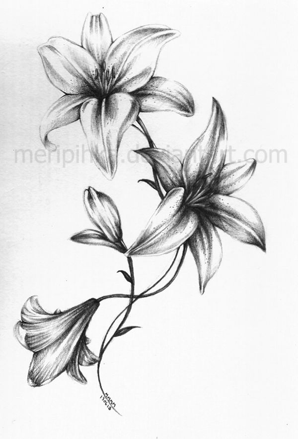 51 Small Lily Tattoos Ideas Ideas And Designs