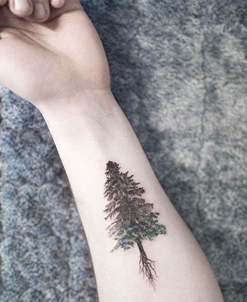 Evergreen Tree Tattoo : evergreen, tattoo, Tattoo, Black, Evergreen, Tattoo., TattooViral.com, Number, Source, Daily, Designs,, Ideas, Inspiration