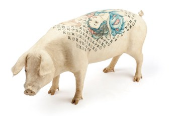 Tatuajes en animales
