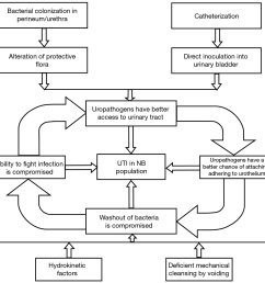 figure 2 schematic representation of interrelated factors contributing to urinary tract infections in the neurogenic bladder 1  [ 1994 x 1250 Pixel ]