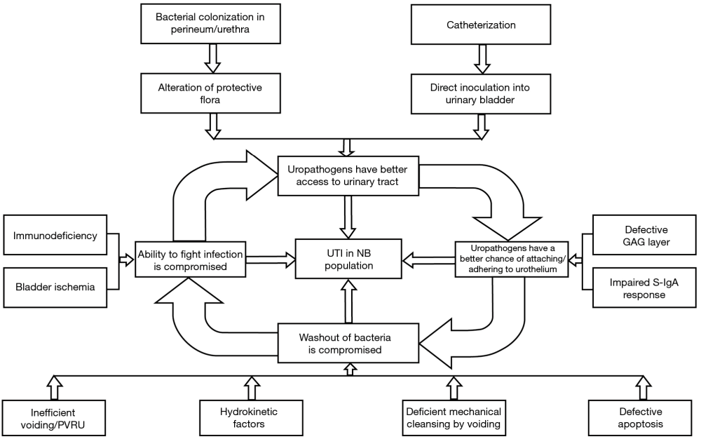 medium resolution of figure 2 schematic representation of interrelated factors contributing to urinary tract infections in the neurogenic bladder 1