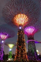 Supertree Grove, Gardens by the Bay Central Singapore - Electrified, Lighting, Night