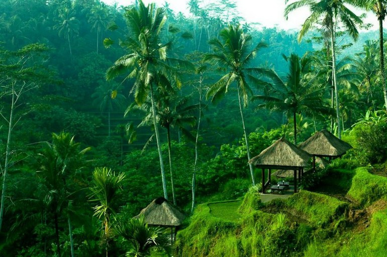 Ubud Gianyar Indonesia - Arecales, Forest, Green, Jungle, Nature, Outdoor structure, Rural area, Terrestrial plant, Tree, Vegetation, Woody plant