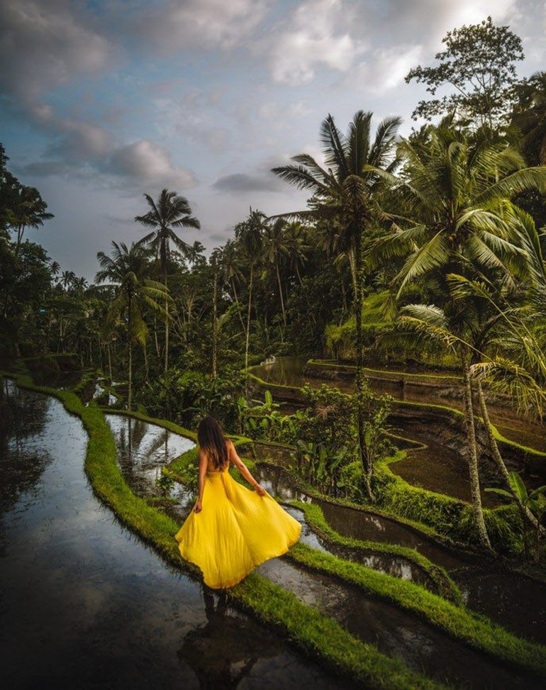 Tegalalang Rice Terrace Ubud Indonesia - Arecales, Attalea speciosa, Hammock, Jungle, Nature, Outdoor structure, Palm tree, Person, Rainforest, Reflection, Tropics, Woody plant