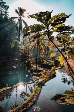 Tegalalang Rice Terrace, Ubud Bali Indonesia - Body of water, Landscape, Natural landscape, Nature, Outdoor structure, Reflection, Water resources, Watercourse, Waterway, Woody plant