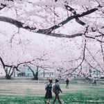 Chosen,   Japan - Botany, Branch, Flower, Gesture, Grass, Light, Nature, People in nature, Person, Photograph, Plant, Sky, Tree, Twig, Woody plant