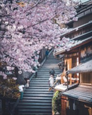 Kyoto, Japan - Branch, Building, Flower, Light, Lighting, Photograph, Plant, Stairs, Tree, Wall