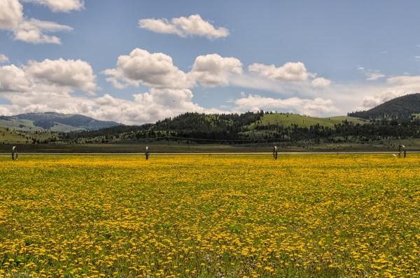 Farm Field Landscape Photography