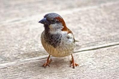 spatzen vogelabwehr