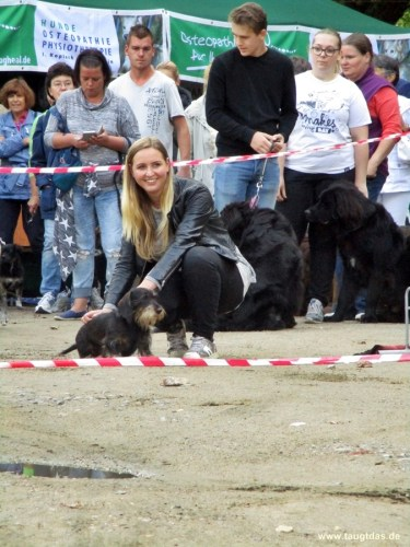 Hunderennen am Dog Day