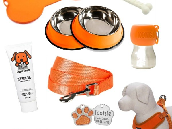 13 Halloween Items Your Dog Can't Live Without