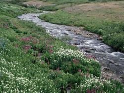 Ein Bach, der durch einen Wald fließt.