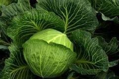 kapustová zelenina a korzety