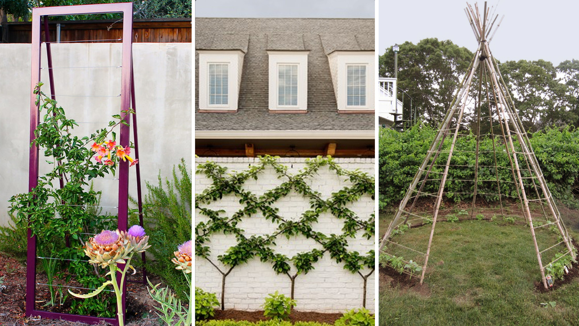7 Trellis Ideas Every Green Thumb Will Appreciate Realtor with regard to 12 Awesome Initiatives of How to Upgrade Backyard Trellis Ideas