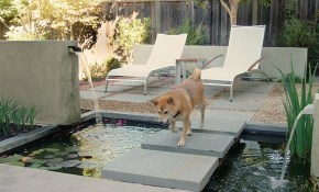 8 Backyard Ideas To Delight Your Dog Huffpost in 14 Clever Ideas How to Craft Dog Backyard Ideas