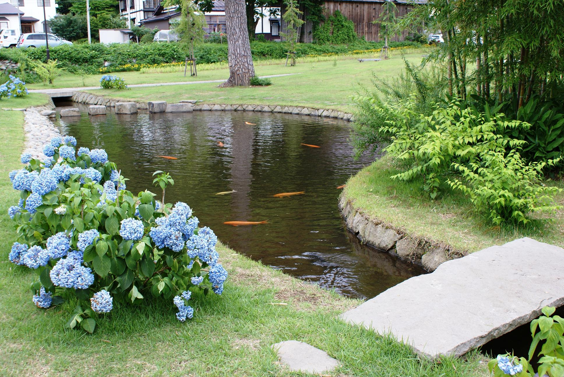 Backyard Fish Farming Raise Fish In Your Home Pond Worldwide within Backyard Fish Pond Ideas