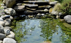Backyard Pond Waterfall Ponds Ponds Backyard Pond Garden with regard to 14 Awesome Ideas How to Build Backyard Pond Landscaping