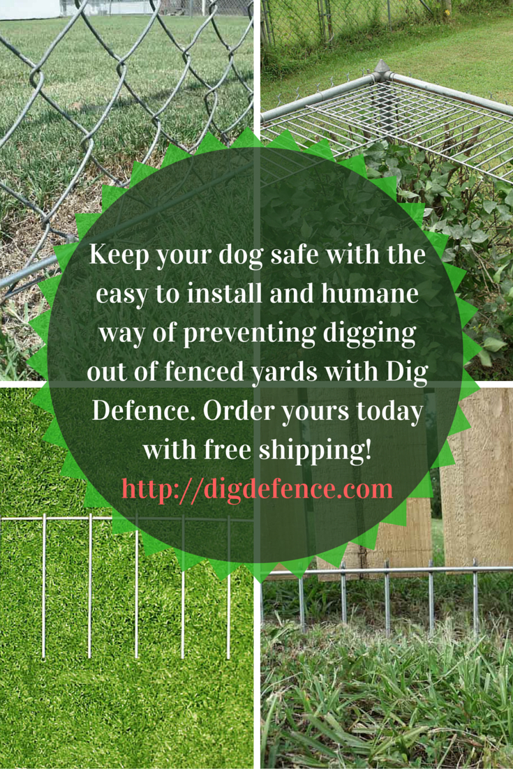 Dig Defence Keeps Dogs In Their Yards Farm Chickens Stop Dogs pertaining to 13 Awesome Ways How to Improve Backyard Ideas For Dogs That Dig