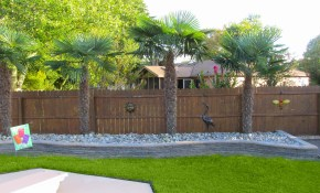 Free Photo Palm Trees Backyard Plants Trees Palms Free for 10 Some of the Coolest Concepts of How to Improve Trees For Backyard Landscaping
