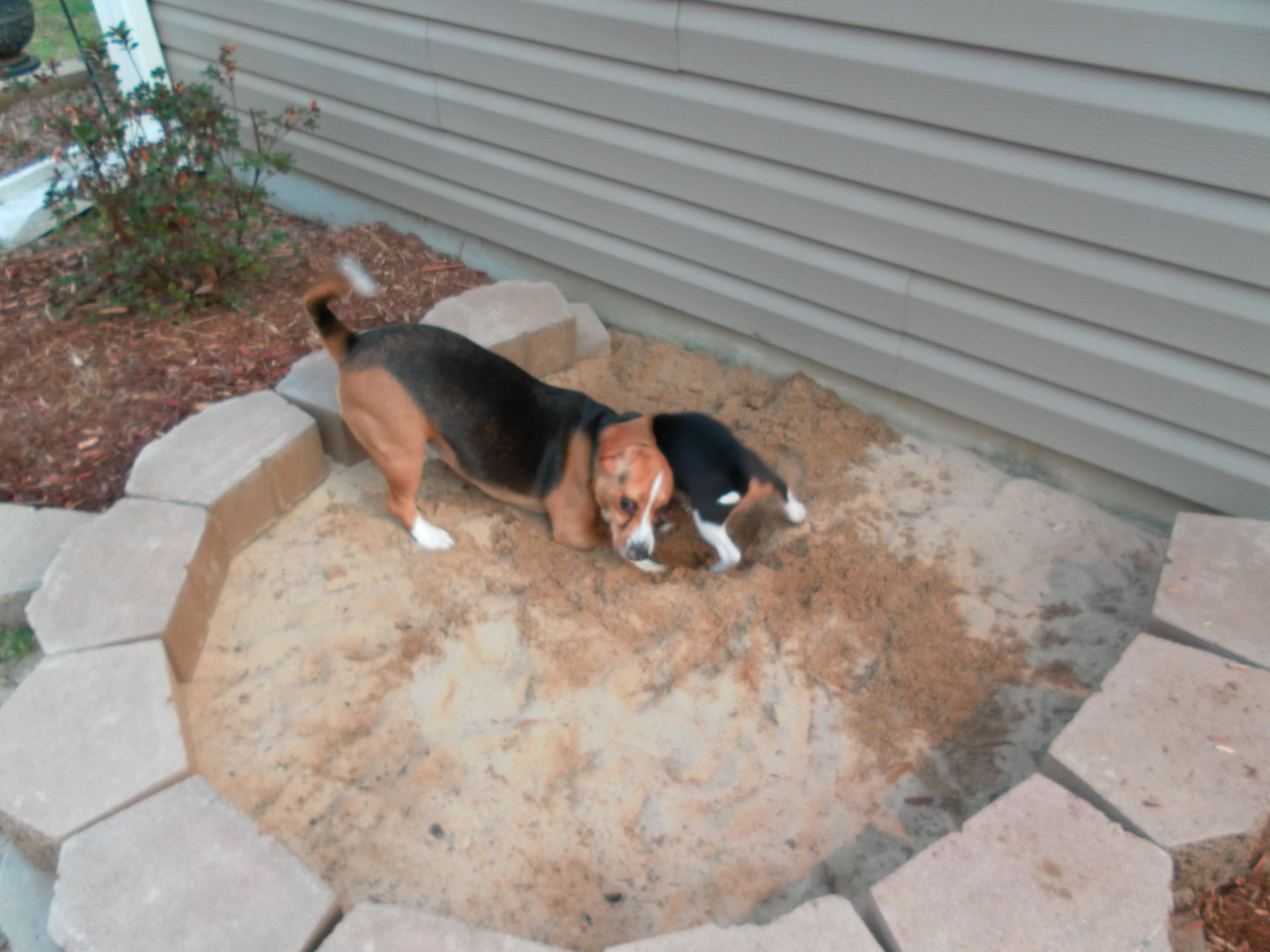 Have Dogs That Dig Build Them Their Own Sandbox Safely Let Them with Backyard Ideas For Dogs That Dig