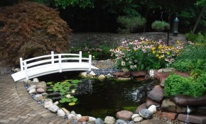 Home Pond Wizard within 14 Awesome Ideas How to Build Backyard Pond Landscaping