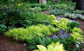 South Florida Landscape Ideas Low Maintenance Landscaping Ideas intended for 11 Smart Tricks of How to Make Florida Backyard Landscaping