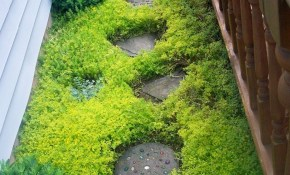 The Sedum Sarmentosum Plant Makes A Fast Growing Ground Cover within 14 Some of the Coolest Ideas How to Makeover Backyard Ground Cover Ideas