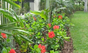 25 Tropical Outdoor Design Ideas Courtyard Tropical Backyard within 14 Awesome Concepts of How to Build Tropical Backyard Landscaping