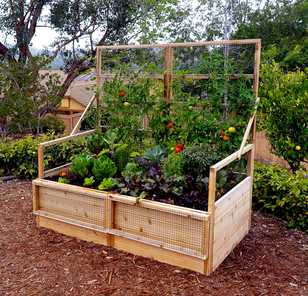 Backyard Garden Ideas What To Plant In Your Backyard Garden throughout Backyard Plant Ideas