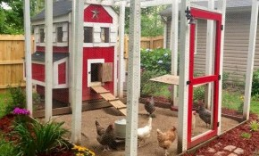 15 Creative And Low Budget Diy Chicken Coop Ideas For Your Backyard with Backyard Chicken Coop Ideas