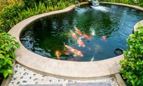 60 Backyard Pond Ideas Photos within Backyard Pond Ideas