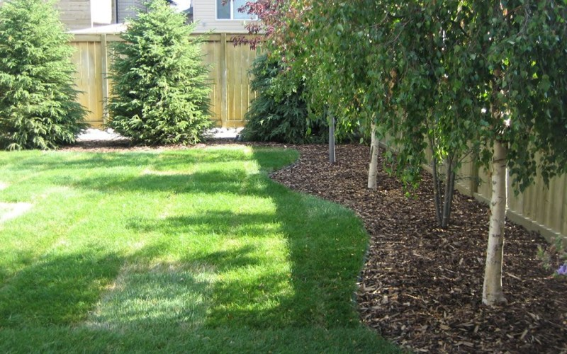 Best Backyard Tree Ideas On Pictures Of Houses And Play From with regard to 12 Smart Ideas How to Make Tree Ideas For Backyard