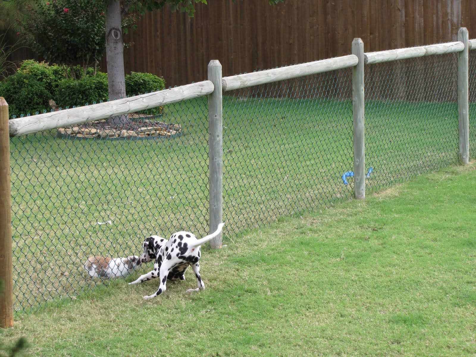 Cheapdogfenceideas Free Issues Of Family Circle Magazine Dog regarding Backyard Fences For Dogs