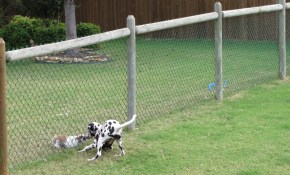 Cheapdogfenceideas Free Issues Of Family Circle Magazine Dog regarding Cheap Fences For Backyard