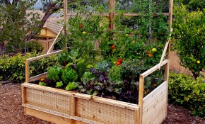 Backyard Garden Ideas What To Plant In Your Backyard Garden pertaining to 15 Genius Ideas How to Upgrade Backyard Garden Ideas