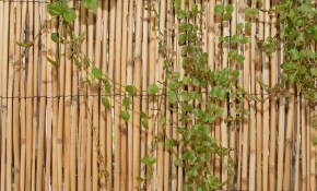 Details About Backyard X Scapes 6 Ft H X 16 Ft W Peeled Reed Fencing regarding 10 Smart Ways How to Make Backyard X Scapes Reed Fencing