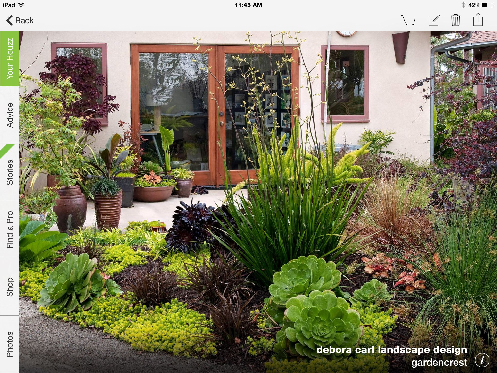 Drought Tolerant Landscape Succulents Mediterranean Garden intended for 12 Genius Concepts of How to Makeover HOUZZ Backyard Landscaping