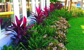 Stunning Way To Add Tropical Colors To Your Outdoor Landscaping regarding Plant Ideas For Backyard