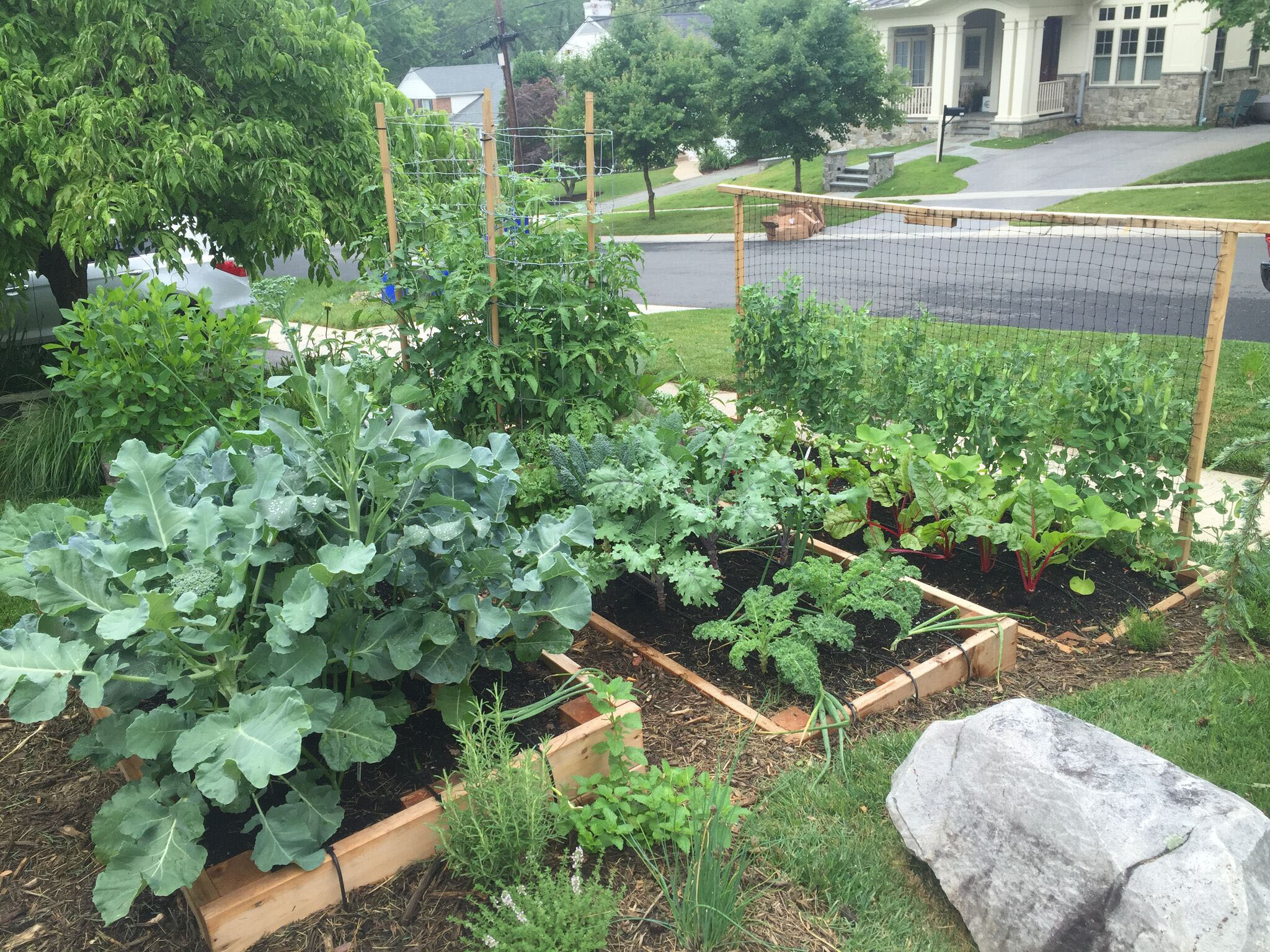 Why You Should Plant A Front Yard Veggie Garden within Backyard Vegetable Garden Ideas