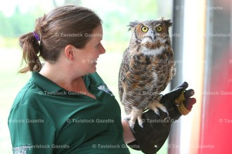 Jenn Bock with Einstein, the Great Horned Owl.