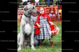 4-year-old Lucinda Ward, as Little Red Riding Hood, is shown with the Big Bad Wolf, her 11-month-old family dog, Seamus, an Irish Wolfhound. She took first prize in the 'Best Dressed Owner and Pet for a Hallowe'en Party' in the Pet Show on Sunday. She is the daughter of Chris and Melissa Ward.
