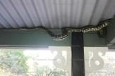 snakea_4816