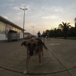 Morning Men and a Friendly Dog - Sabah Adamları ve Dost Bir Köpek