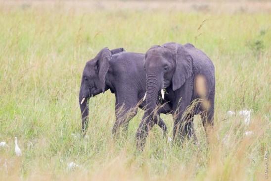 Katavi National Park, Tanzanie