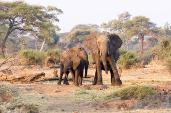 Senyati, Botswana