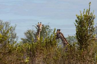 Zambezi Narional Park, Zimbabwe