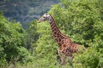Parc National de l'Akagera, Rwanda