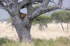 Serengeti National Park, Tanzanie