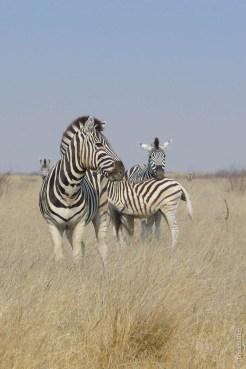 Makgadikgadi National Park, Botswana