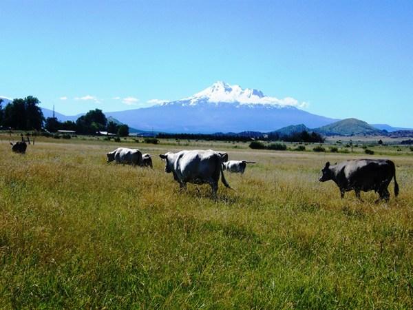 Tawanda Farm